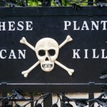 13 Most Deadliest Poisonous Plants around the World