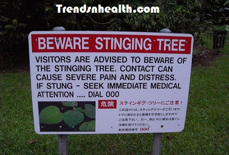 fruit of the poisonous tree doctrine healthy fruits for diabetics
