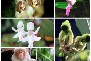 25 Rare and Weird Flowers that Look Like Something Else Around the World