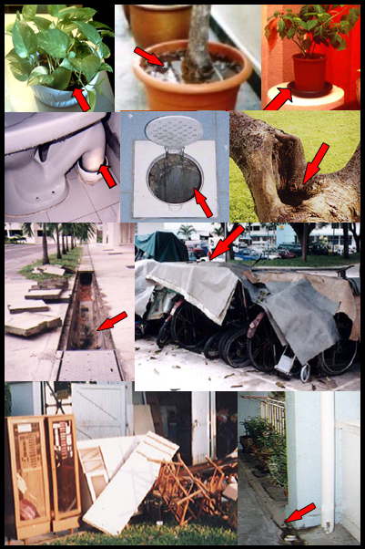 dengue mosquito breeding collage 2