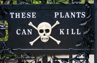 Beware these plants can kill you